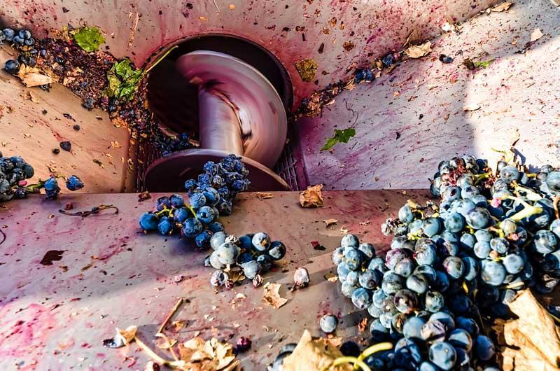 """L'Aglianico è un vitigno rosso coltivato prevalentemente in Basilicata, Campania, Puglia e Molise. È un vitigno antico, probabilmente originario della Grecia e introdotto in Italia intorno al VII-VI secolo a.C. Una delle tante testimonianze della sua lunga storia è il ritrovamento dei resti di un torchio romano nella zona di Rionero in Vulture, provincia di Potenza. Non ci sono certezze sulle origini del nome, che potrebbero risalire all'antica città di Elea (Eleanico), sulla costa tirrenica della Campania, o essere più semplicemente una storpiatura della parola Ellenico. Testimonianze storico-letterarie sulla presenza di questo vitigno si trovano in Orazio, che cantò le qualità della sua terra natia Venosa e del suo ottimo vino. Il nome originario (Elleanico o Ellenico) divenne Aglianico durante la dominazione aragonese nel corso del XV secolo, a causa della doppia l pronunciata gli nell'uso fonetico spagnolo. E' il vitigno fondamentale per la produzione del prestigioso Taurasi, importante DOCG rosso del Sud Italia.  Aglianico (pronounced [aʎˈʎaːniko], roughly """"ahl-YAH-nee-koe"""") is a black grape grown in the Basilicata and Campania regions of Italy. The vine originated in Greece and was brought to the south of Italy by Greek settlers. The name may be a corruption of vitis hellenica, Latin for """"Greek vine."""" Another etymology posits a corruption of Apulianicum, the Latin name for the whole of southern Italy in the time of ancient Rome. During this period, it was the principal grape of the famous Falernian wine, the Roman equivalent of a first-growth wine today.  In Campania, the area in and around the village of Taurasi produces Aglianico's only DOCG wine, also called Taurasi.  The Aglianico vine buds early and grows best in dry climates with generous amounts of sunshine. It has good resistance to outbreaks of oidium, but can be very susceptible to Peronospera. It also has low resistance to botrytis, but since it is much too tannic to make a worthwhile dessert wine, """