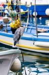 Un airone cinerino al porto di Camogli