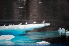 Gabbiani ed iceberg