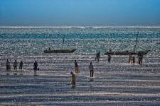 Bassa marea # 1