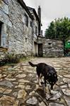 """È la porta d'accesso alla Galizia per chi percorre il Cammino di Santiago. Cebreiro venne fondata prima dell'arrivo dei Romani, come testimoniano le """"pallozas"""", abitazioni di pietra dalla forma ellittica con tetti di paglia, di probabile origine celtica. Un altro sito di interesse e valore storico è la chiesa preromanica di Santa Maria la Real, fondata nell'XI secolo dai monaci benedettini.    Il paesaggio della Galizia è pieno di fiabe e proverbi, streghe e maghi, di apparizioni inattese e bo¬schi fatati, spiriti volanti e nebbie celtiche, anche chi cammina solo per qualche ora nella penombra e poi prosegue per tutta la notte si sente prigioniero di una chimera, il sentiero non è un sen¬tiero, i cespugli sono cavalli, la voce che sento viene da un altro mondo. E fa anche freddo, quando arrivo in cima al Cebreiro ne¬vica, entro in una di quelle capanne di pietra preistoriche, pallo- zas, bassa, scura, pavimento di terra, mobili che sono ancora quasi alberi, pentole annerite che un tempo erano appese sopra un fuo¬co in mezzo alla capanna, permane odore di fumo, il tetto aguzzo di canne intrecciate, come le capanne dei Dogon nel Mali. Ven- t'anni fa qui ci viveva ancora della gente, nove di queste costru¬zioni sono conservate, ma non c'è più nessuno che accenda il fuo¬co, eppure un tempo tutta l'Europa passava di qua perché in cima a questa montagna era accaduto un grande miracolo: un contadi¬no credente, un monaco miscredente, la vera carne, il vero san¬gue, il calice che lo contenne c'è ancora, perfino i re cattolici ven-nero a vederlo. Anche qui i monaci di Cluny avevano un ostello, se ne anda¬rono appena nel secolo scorso, in silenzio, come chi è stato in un luogo per mille anni e ora volta l'ultima pagina di un libro molto spesso che chiude per sempre, una storia passata di potere, fede e politica, che per secoli ha dominato la storia d'Europa. C'è anco¬ra, quell'ostello, sembra quasi che sia stata la montagna stessa a costruirlo, brilla quella pietra grezza e fr"""