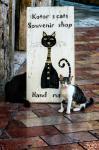 Kotor's cats