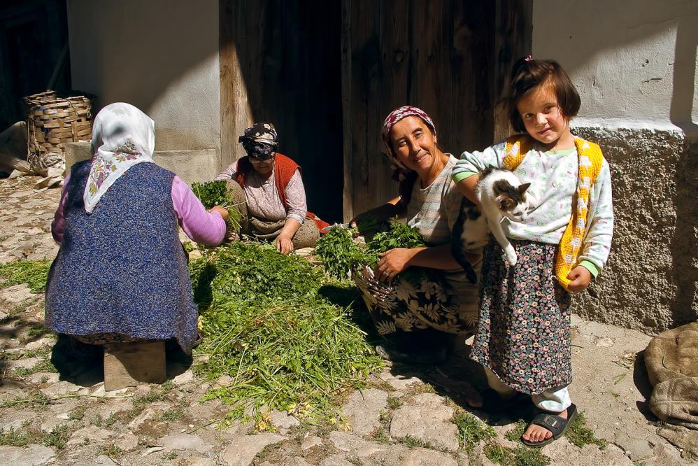 Yörük Köyü 4 - La gatta