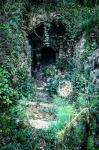 Dandelion entrance
