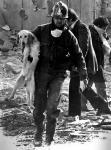 Avellino - Il cane salvato