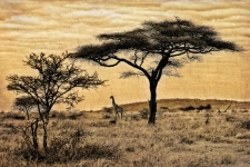 Out in the savannah
