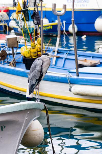 The heron of Camogli