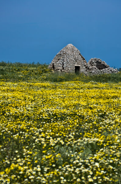 Landscape with springtime flowers and trullo