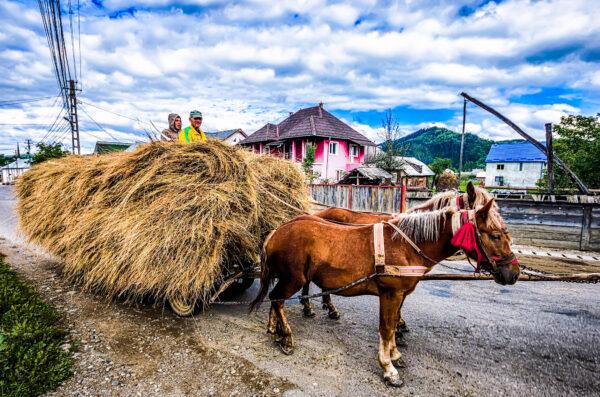 Maramures carri cavalli ed internet - Carro a cavalli e fieno