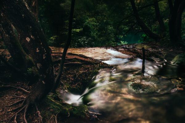 Vortice - Laghi di Plitvice Croazia