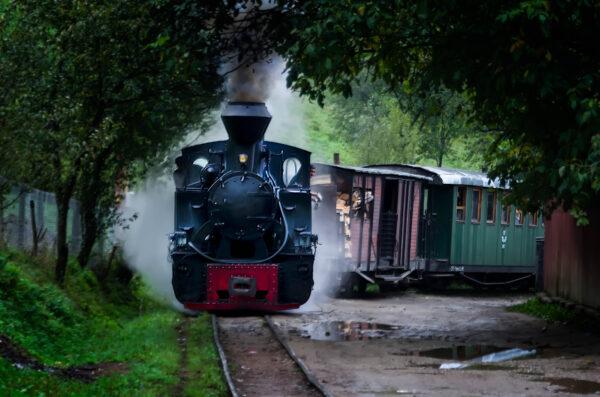 Mocanita Treno in marcia