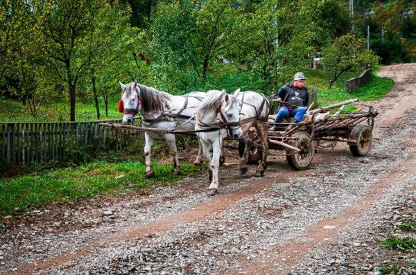 Carri a cavalli Maramures Romania