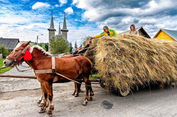 Maramures Romania Traditional horse carts