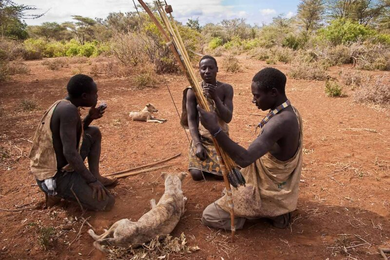 Hadzabe, the last hunters-gatherers . Preparing the poisoned arrows